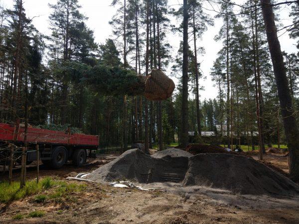 Suurte puude istutamine